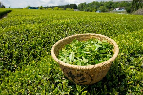 What's in Your Green Tea? | Food issues | Scoop.it
