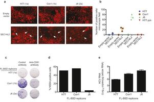 SEC14L2 enables pan-genotype HCV replication in cell culture | Hepatitis C New Drugs Review | Scoop.it