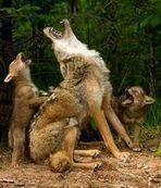 Les animaux, aussi, sont sur écoute - Journal de l'environnement | Les sons de la nature | Scoop.it