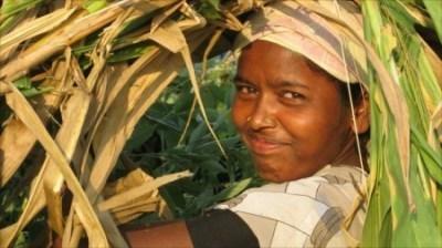 Changement climatique, du mil à la place du blé pour nos baguettes en 2050? | agriculture et développement territorial | Scoop.it