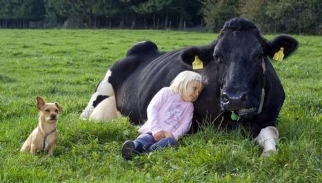 L'alimentation éthique dans l'actualité – Mai 2012 « Association Manger Santé Bio | Ecologie et protection animale | Scoop.it