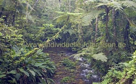 Atlantischer Regenwald von Brasilien | Umwelt in Brasilien | Scoop.it