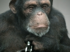 PETA's Incredibly Lifelike CGI Ape Begs You Never to Use Real Ones in Ads Again | consumer psychology | Scoop.it