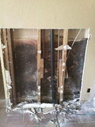 Is black mold toxic? Black Mold Removal   Gregory Cleaning Restoration   Gregory Restoration   Scoop.it