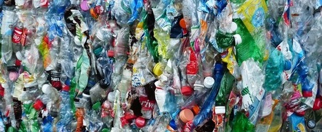 Encuentran hongo que degrada plásticos en menos de tres días | Las TIC en el aula de ELE | Scoop.it