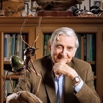 Interview with Edward O. Wilson: The Origin of Morals | Marketing Revolution | Scoop.it