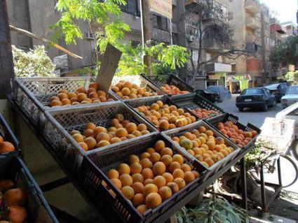 Egypte : les revenus des exportations agricoles ont quadruplé sur les dix dernières années  | CIHEAM Press Review | Scoop.it