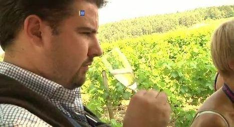 Canal 32 - Les professionnels invités à découvrir les champagnes locaux | La Route du Champagne en Fête | Scoop.it