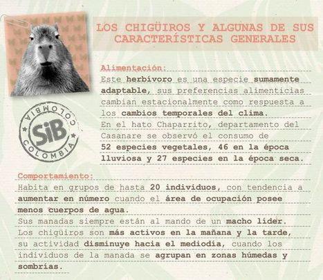Conoce cómo se comportan los chiguiros: Biodiversidad Colombiana | Agua | Scoop.it