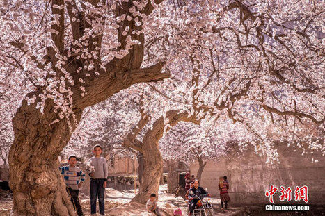 Hidden paradise found in remote NW China   News from nowhere   Scoop.it