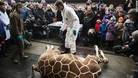 Denmark's zoos are becoming execution centers « - ofcoursevegan | zoos should not exist | Scoop.it