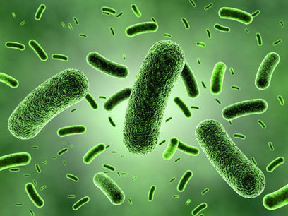 Scientists resolve debate over how many bacteria fight off invaders | mikrobiologija | Scoop.it