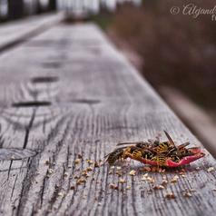 Wasps ~ Abispas | Photography - Design Graphic - SocialMedia | Scoop.it