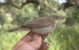Εθελοντικό πρόγραμμα καταγραφής πουλιών της Θεσσαλονίκης - AgroNews (Εγγραφή) | Wildlife | Scoop.it