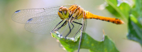 L'Agence française pour la biodiversité est en ordre de marche - Actu environnement | Chimie verte et agroécologie | Scoop.it
