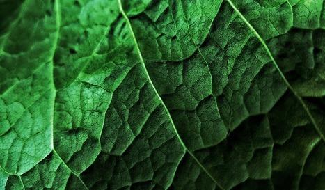 De l'essence sans pétrole à partir de déchets végétaux | Confidences Canopéennes | Scoop.it