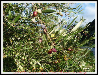 CretaVita : Philosophy And Olives From Greece | CretaVita Extra Virgin Olive Oil Producer #OliveOil #EVOO | Scoop.it