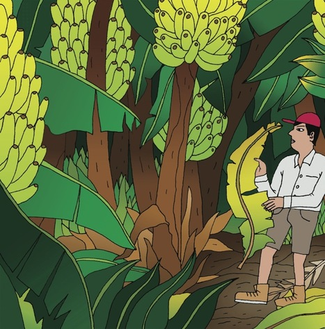 The New Yorker: We Have No Bananas - Can scientists defeat a devastating blight? (2015) | Plant immunity | Scoop.it