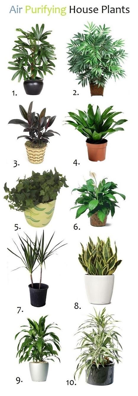 10 Air Purifying House Plants | Backyard Gardening | Scoop.it