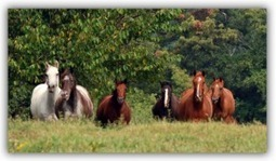 Ever Wonder Why Some Equine Supplements Work And Others DON'T | Horse Care | Scoop.it
