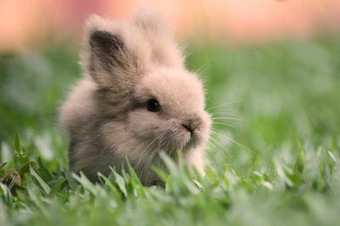 40 interesting facts about rabbits ~ Interesting Facts You Should Know   Every Thing Around the World   Scoop.it