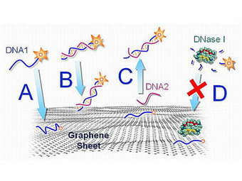 Carbon-based nanotechnology materials for biomedical engineering | Nanotechnology | Scoop.it