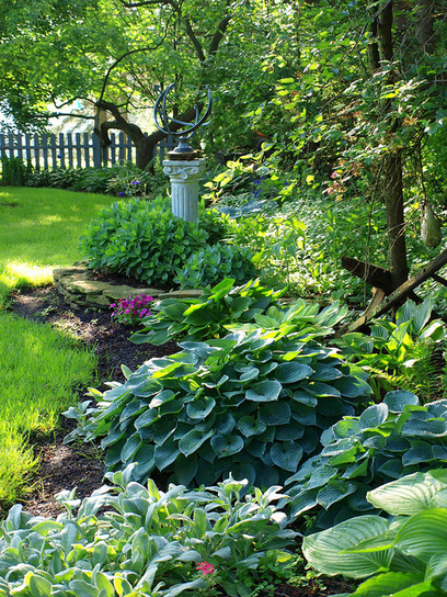 Back Yard Hostas   Outside Ideas   Scoop.it