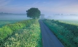 Wildflowers on the verge of disappearing | Wenlock Edge | Scoop.it