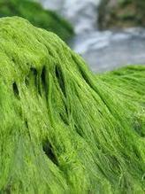 Spirulina Benefits for Men < Green Food & Drinks   Whassup!!!   Scoop.it