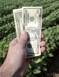 5 Steps to Writing a Farm Grant - Hobby Farms | Annie Haven | Haven Brand | Scoop.it