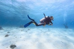 Sustainable Diving: A guide to Becoming a Sustainable Diver - DIVE.in   All about water, the oceans, environmental issues   Scoop.it