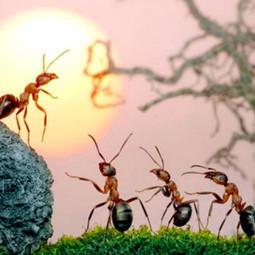 10 Curiosidades de las hormigas que quizás no ¿Sabías? | Datos Curiosos de la Ciencia y el Mundo | Scoop.it