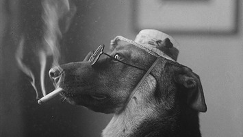Even In The 1900s, Humans Were Obsessed With Photos Of Dogs In Clothes | Walking On Sunshine | Scoop.it