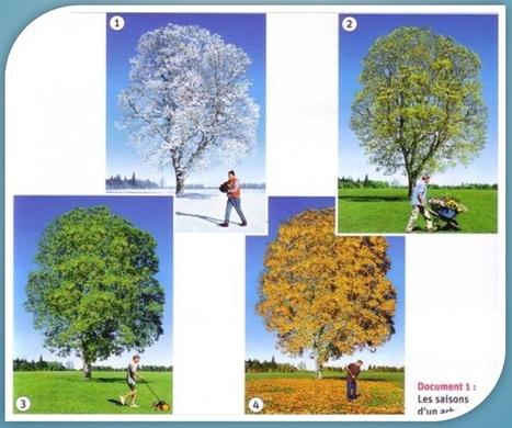 Diaporama et fiches-élève sur les saisons | Découvertes de SitesPE | Scoop.it