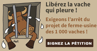 PETITION - Projet de ferme-usine des #1000vaches : Non merci !   Développement durable et écologie   Scoop.it