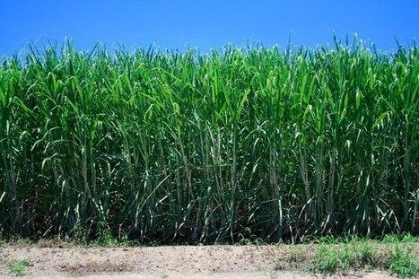 The effect of herbicide tank mix on the weed species diversity in sugarcane (Saccharum officinarum) | International Journal of Biomolecules and Biomedicine (IJBB) | Scoop.it