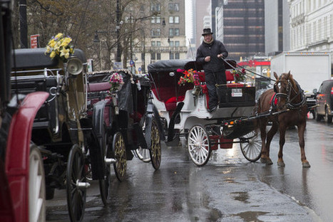 Poll: Should Horse-Drawn Carriages Be Banned? | Animals - fact and fiction | Scoop.it