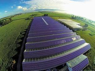 Vine Fresh plants six-acre solar rooftop array - Daily Commercial News | Agricultural & Horticultural Industry News | Scoop.it