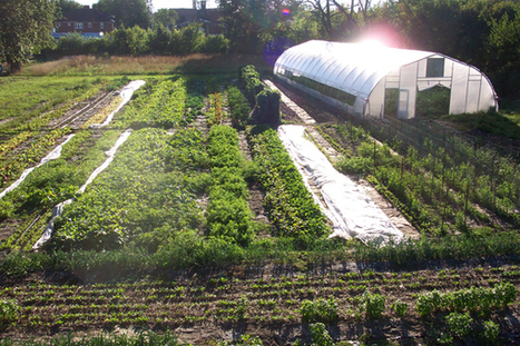 Detroit Urban Farm Looks To Get Into Local Fish Farming | EarthTechling | Aquaculture Directory | Scoop.it