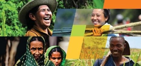 CGIAR Annual Report 2013 | BioFuels - Agriculture & Oil Trees | Scoop.it