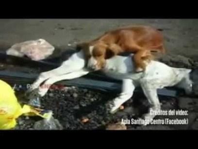 Crying Dog Mourns over his Dead Friend | staged | Scoop.it