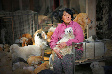 Inspiring Chinese Woman Travels 1,500 Miles to Rescue 100 Dogs from a Dog-Meat Festival | Le It e Amo ✪ | Scoop.it