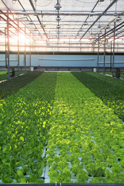 Indoor urban farms called wasteful, 'pie in the sky' | Cornell Chronicle | Aquaponics~Aquaculture~Fish~Food | Scoop.it