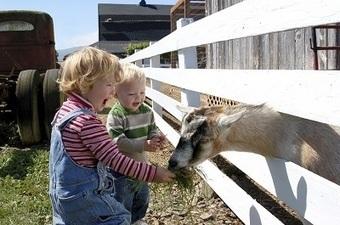 La settimana dei bambini: in agriturismo con tutta la famiglia - Mindthetrip | Mind The Trip | Scoop.it