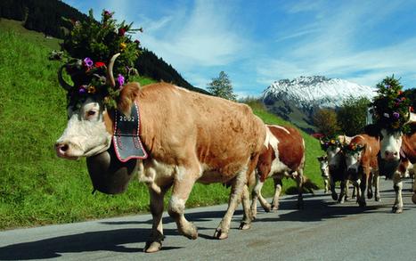 L'Etivaz, une vie pour le fromage | thevoiceofcheese | Scoop.it