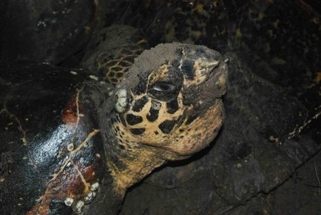 Empowering Children to Change the Fate of Sea Turtles in El Salvador | STEM Connections | Scoop.it