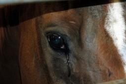 Praise Program to End Animal Cruelty | Humanity | Scoop.it