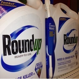 BREAKING: Glyphosate (Roundup) Carcinogenic In the PARTS PER TRILLION Range #Monsanto #GMO #toxic | Messenger for mother Earth | Scoop.it