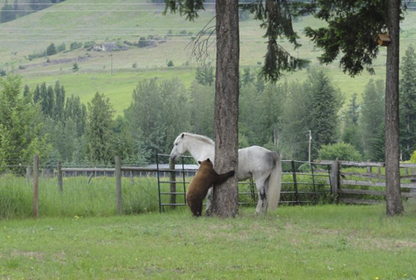 Pony makes friends with a young bear | Horse Sense | Scoop.it