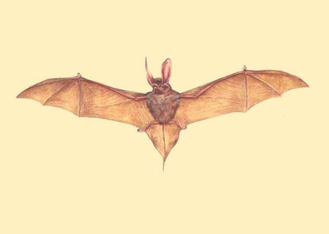 Two Fossil Species of Sucker-Footed Bats Discovered in Sahara | Geology | Scoop.it